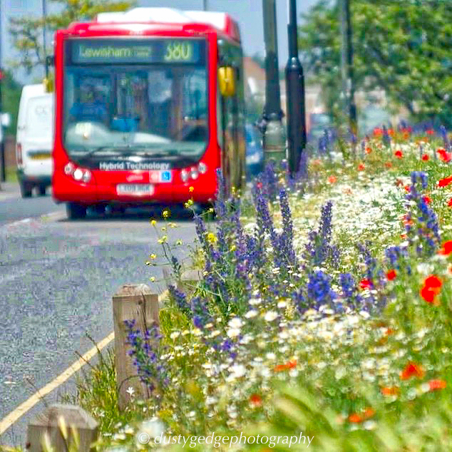 Habitats – wildflower verges and buses
