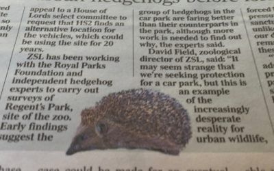 Hedgehogs put a prick in HS2