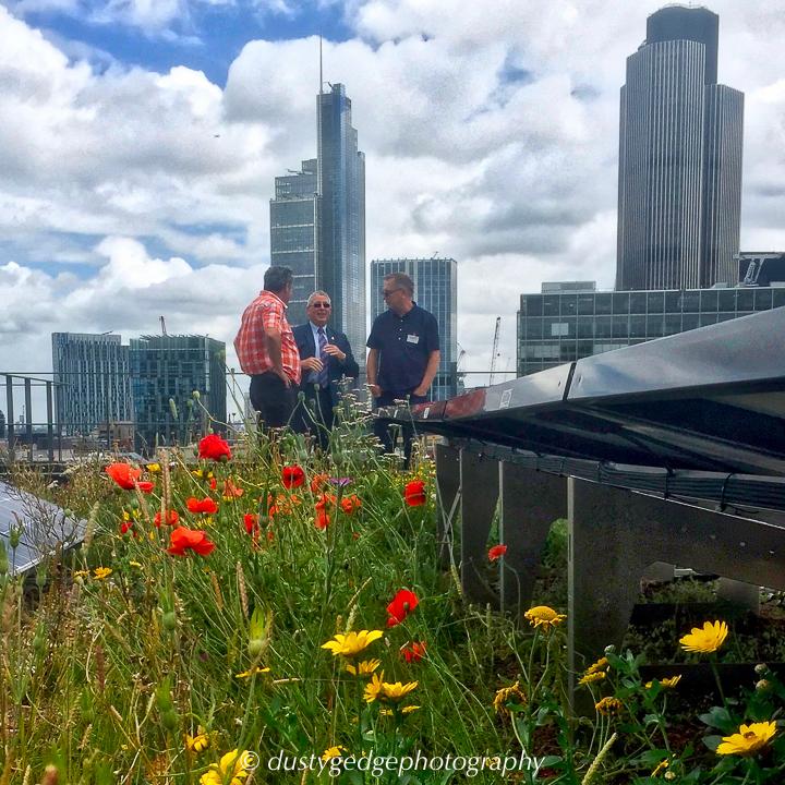 London green roof habitat for wildlife alongside solar power