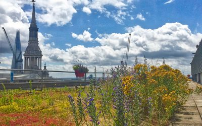 London habitats 1 – green roofs