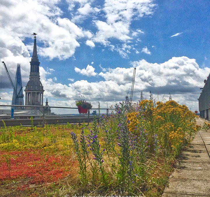 London habitats 1 – green roofs