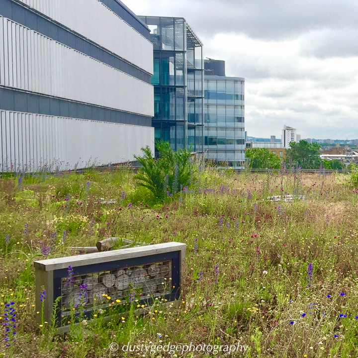 Green roof wild space are good for wildlife
