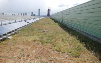Black Redstarts on London Olympic Green Roof
