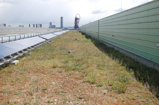 The London Olympics biggest green roof – courtesy of Stuart Connop UEL