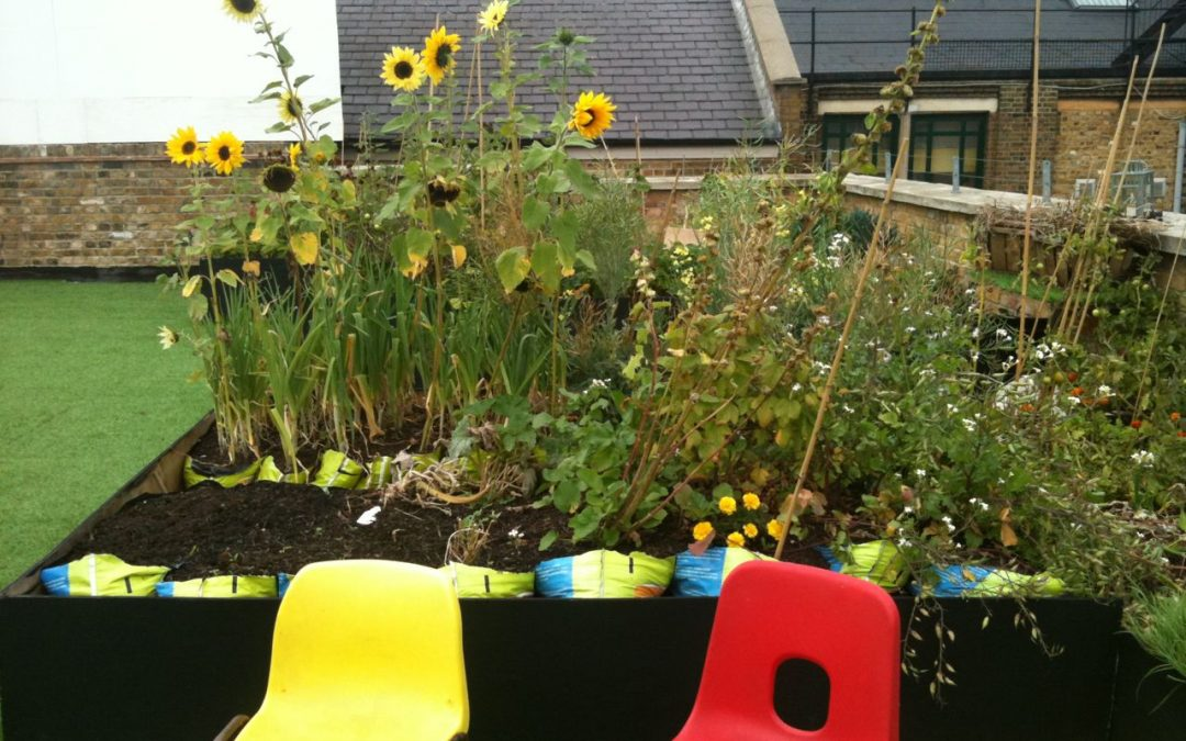Rooftop allotment – Dalston, London