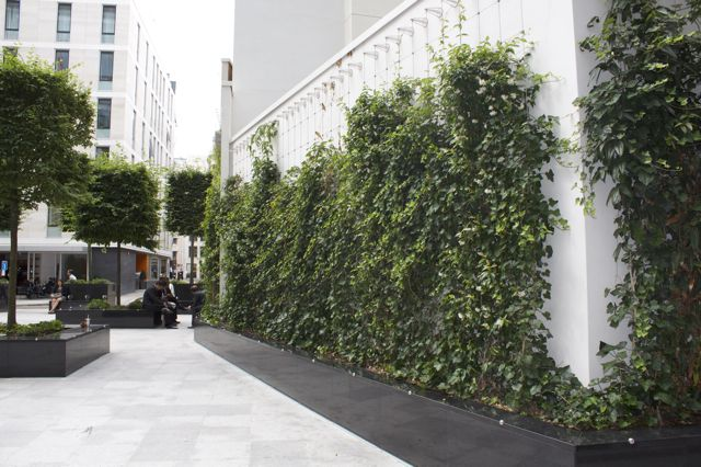 Green wall and Bird Boxes – City of London