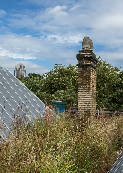 Wetlands, Rain Gardens and PDX summit