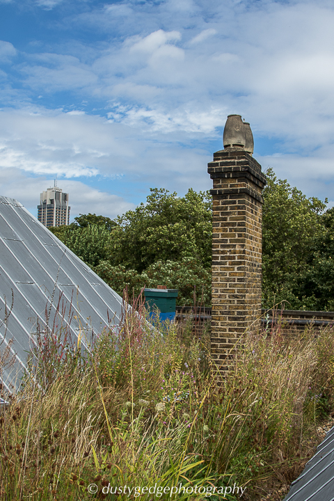 Late summer view of the V&A wetland roof